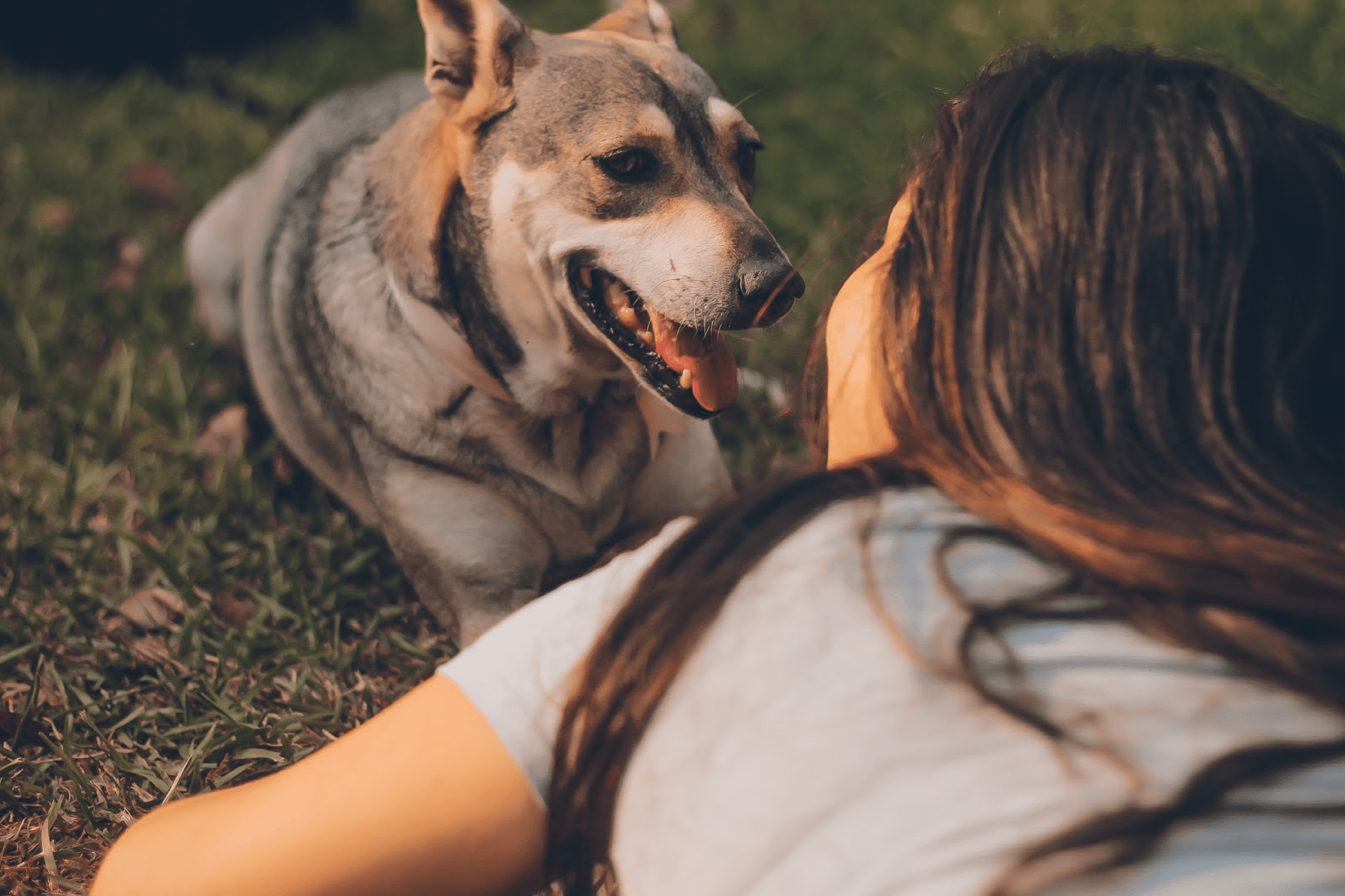 spend time with your furry friend at one of tanyard shores' pet-friendly amenities